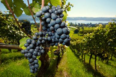 Dormir dans un domaine viticole