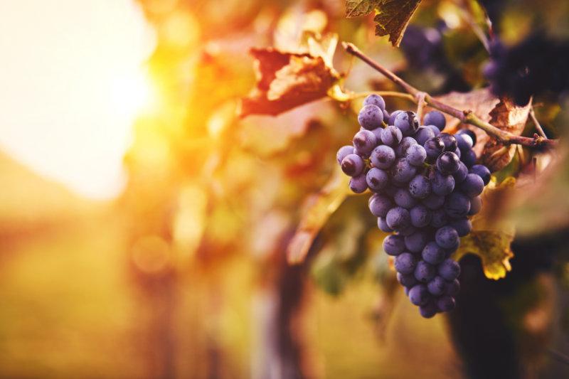 Vente en ligne de vigneron indépendant