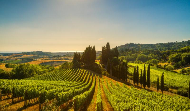 Œnotourisme en Hérault : découvrir la vinification