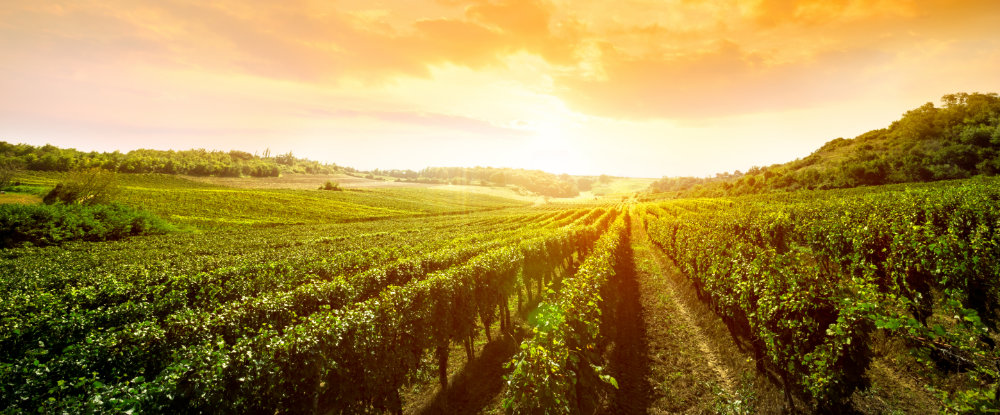 Vente de vin issu de la viticulture biologique